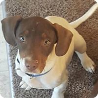 Adopt A Pet :: Fletcher - Plainfield, CT