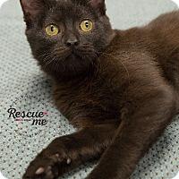 Adopt A Pet :: Mahalo - Washburn, WI