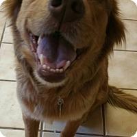Adopt A Pet :: Korra - Alexandria, VA
