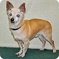 Adopt A Pet :: Bam Bam - Port Washington, NY