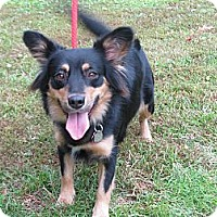 Adopt A Pet :: Roxanne - Kingwood, TX