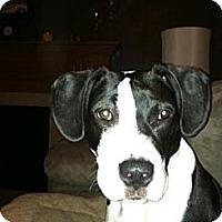 Adopt A Pet :: Dorian - Grand Rapids, MI