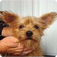 Adopt A Pet :: Ethel - Irvington, KY