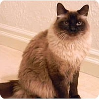 Adopt A Pet :: Atticus - Naples, FL