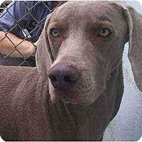 Adopt A Pet :: Rebel **ADOPTED** - Eustis, FL