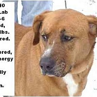 Adopt A Pet :: # 640-10 - ADOPTED! - Zanesville, OH