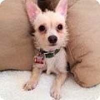 Adopt A Pet :: Auntie - Phoenix, AZ