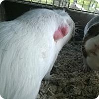 Adopt A Pet :: Elsa - Spokane Valley, WA