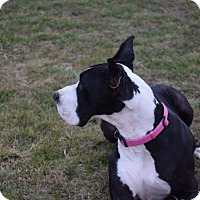 Adopt A Pet :: Idgie - COURTESY LISTING - St. Louis, MO