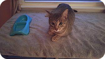 Cat Rescue Livingston County Ny