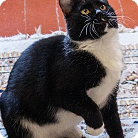 Adopt A Pet :: Cookie - Prescott, AZ