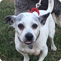 Adopt A Pet :: Skipper - Oak Ridge, NJ