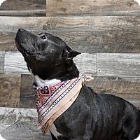 Adopt A Pet :: Gabby - Muskegon, MI