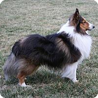 Adopt A Pet :: Frankie - Mission, KS