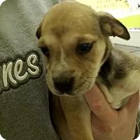 Adopt A Pet :: Nellie - Cherry Hill, NJ