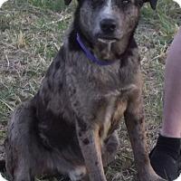 Adopt A Pet :: Jackson - Cabool, MO