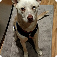Adopt A Pet :: Chloe - Adoption pending - Gig Harbor, WA