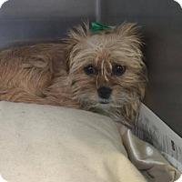 Adopt A Pet :: Bug - Phoenix, AZ