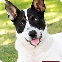 Adopt A Pet :: Chico - Marina del Rey, CA