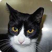 Adopt A Pet :: Lucian - Miami, FL