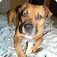 Adopt A Pet :: Rhett - Missouri City, TX