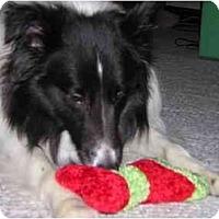 Adopt A Pet :: Paden - Indiana, IN