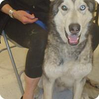 Adopt A Pet :: Connor - Ashland, OR