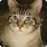 Adopt A Pet :: Trevor - Byron Center, MI