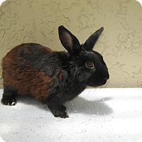 Adopt A Pet :: Clyde - Bonita, CA