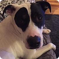 Adopt A Pet :: Opie - Saskatoon, SK