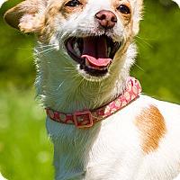 Adopt A Pet :: Leia - Owensboro, KY