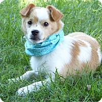 Adopt A Pet :: Ryleigh - Mocksville, NC