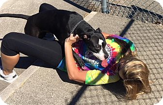 Pit Bull Terrier Mix Dog for adoption in Peru, Indiana - Lanie