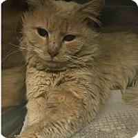 Adopt A Pet :: Cully - Herndon, VA