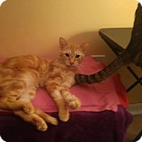 Adopt A Pet :: Leo Lion - Warren, MI