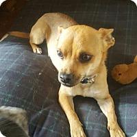 Adopt A Pet :: Sallee - Cincinnati, OH