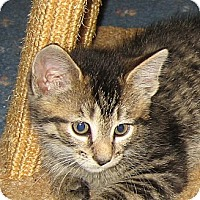 Adopt A Pet :: JIMMY - 2013 - Hamilton, NJ