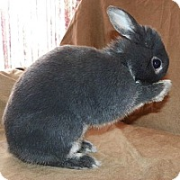 Adopt A Pet :: Dobbler - North Gower, ON
