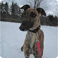 Adopt A Pet :: Marion (Marion Money) - Chagrin Falls, OH