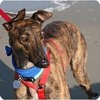 Adopt A Pet :: Gable Ceviche