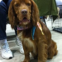Adopt A Pet :: Nick - Sugarland, TX