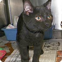 Adopt A Pet :: Buddy - Dover, OH