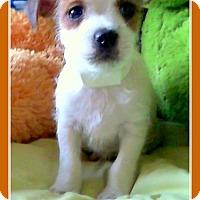 Adopt A Pet :: PETER - Higley, AZ