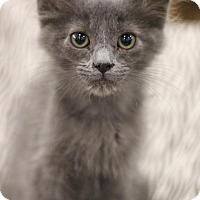 Adopt A Pet :: Isaac - Sacramento, CA