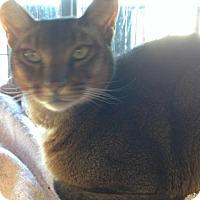 Adopt A Pet :: Christoff - Hamilton, ON