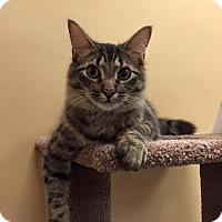 Adopt A Pet :: Sneaky - McDonough, GA