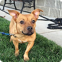 Adopt A Pet :: Shelly - Meridian, ID