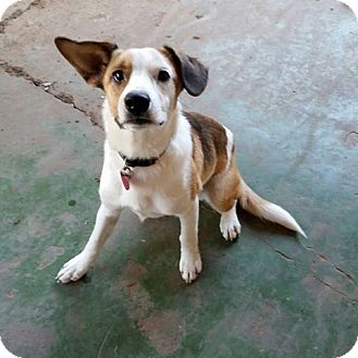 Border Collie Mix Dog for adoption in Wichita Falls, Texas - Jay Jay