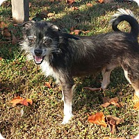 Adopt A Pet :: SCRUFFY-adopted - Cranston, RI