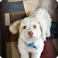 Adopt A Pet :: Devon - Tijeras, NM